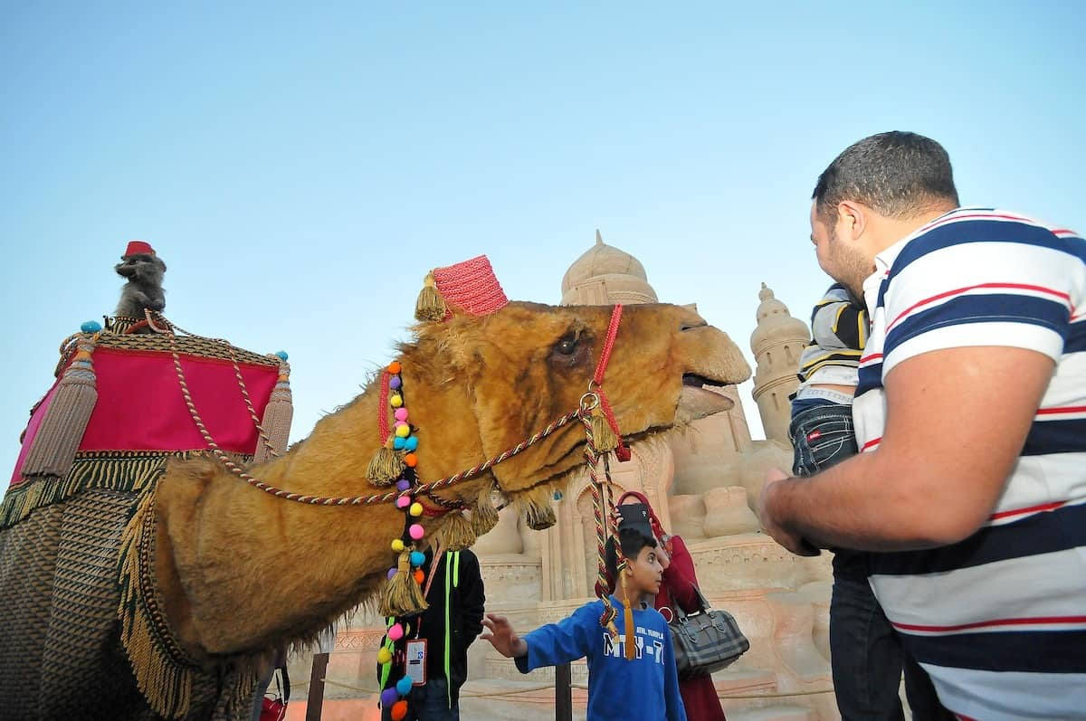 camel walk about act
