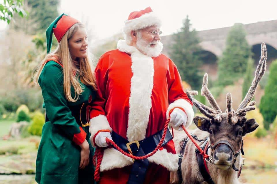 Santa's Reindeer for hire. Our real-life Reindeer are available to book for Christmas-themed events, corporate events or shopping centre events in London & the UK.