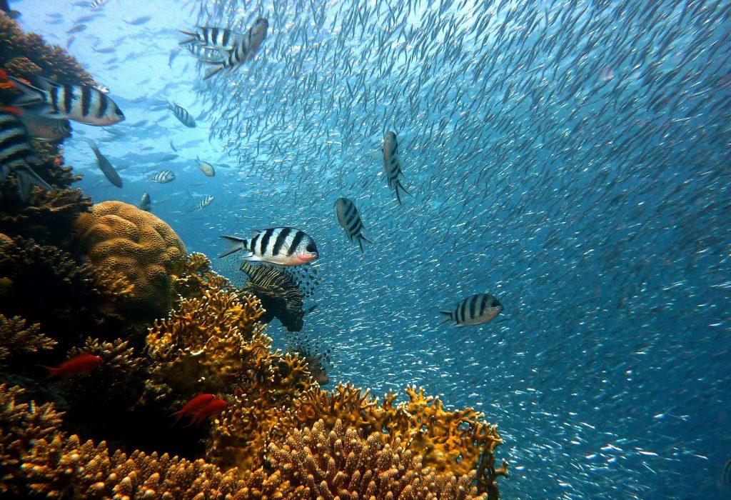 Red Sea, one of Saudi Arabia's tourist attractions