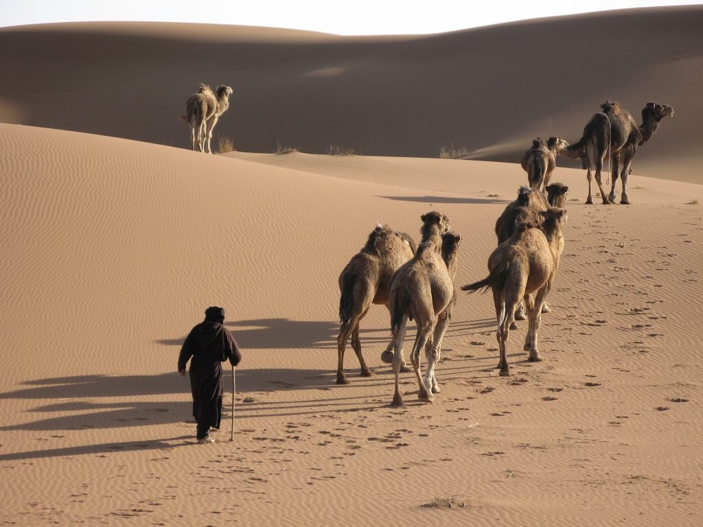 Tourists trekking in the Saudi Arabian Desert with camels as part of the Kingdom's leisure activities.